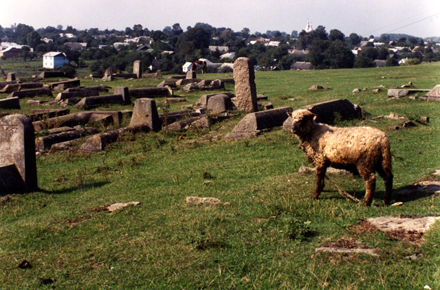 Ukrainians find it acceptable to use Jewish graveyards as pastures for their cattle and sheep.